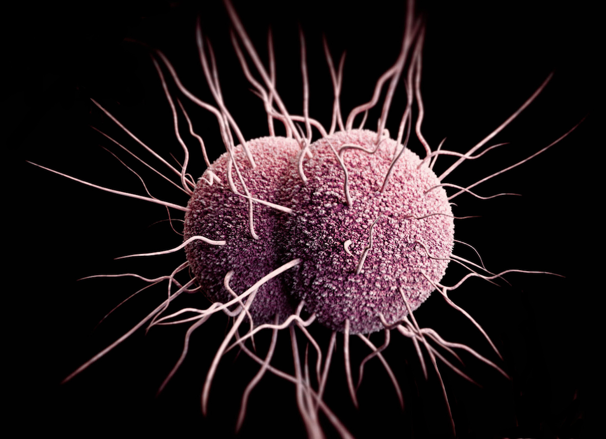 This illustration shows a three-dimensional computer-generated image of <em>Neisseria gonorrhoeae</em> diplococci. The illustration is an artistic recreation based on scanning electron microscopic (SEM) imagery. Note the hair-like appendages extending from the organisms' exterior; these are type IV pili that promote motility and improve surface adherence.<div>Source: Centers for Disease Control and Prevention Public Health Image Library (Medical Illustration—James Archer, 2013).</div>